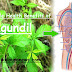 Healing Various Ailments Made Easy Using This 6 Remarkable Health Benefits of Lagundi!
