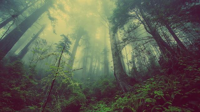 أفضل خلفيات الاشجار في الغابات