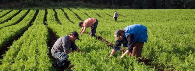 Produtores rurais da região fornecem 50 t de alimentos por mês