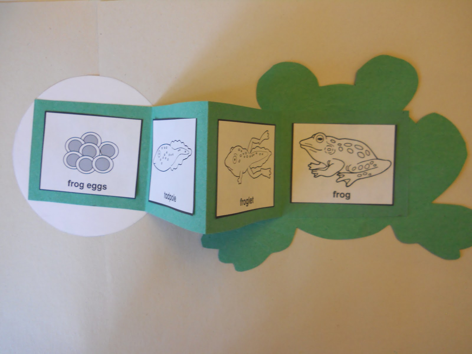Mrs T S First Grade Class Frog Life Cycle