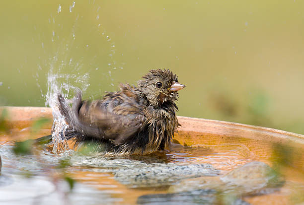 Bird Baths – Attract Birds and Accent Your Yard