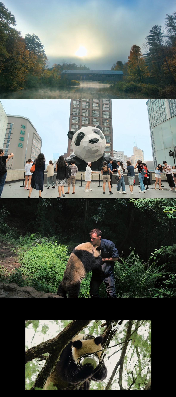 Pandas 2018 HD 720p Latino