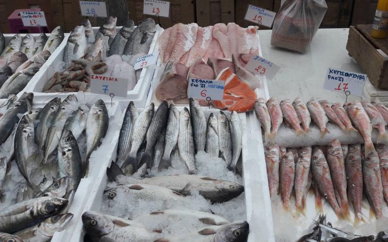 Βαρτζόπουλος: «Τα τουρκικά γρι-γρι ψαρεύουν στα 6 μίλια έξω από το Πόρτο Λάγος»