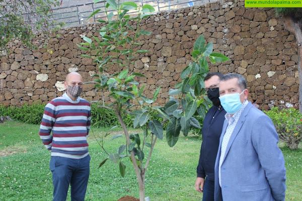 Santa Cruz de La Palma se adhiere a la iniciativa 'Un árbol por Europa'
