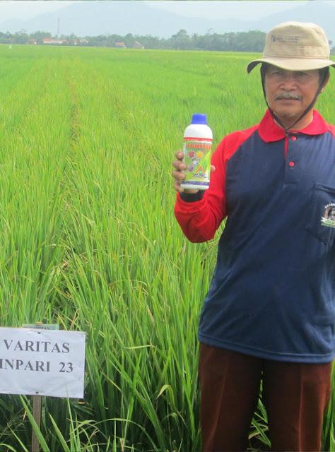 Pupuk Organik Cair Agritech Untuk Tanaman Padi