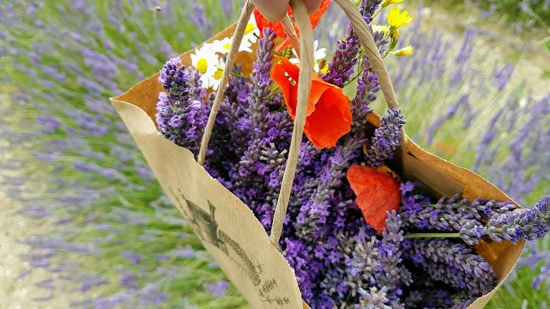 中途採集的薰衣草與野花