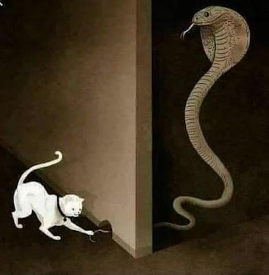 Inspirasi Dibalik Lukisan Kucing Dan Ular Kobra Inspirasi Dibalik Lukisan Kucing Dan Ular Kobra