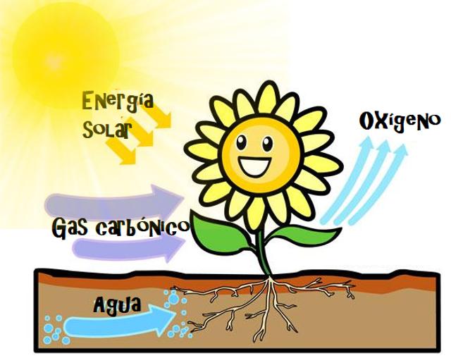 Ciencias naturales las plantas y la fotos ntesis - Como solar un suelo ...