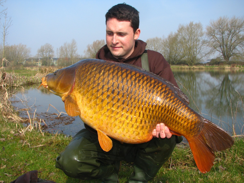 8 Umpan Ikan Mas Jitu Murah Alami Mudah Tanpa Campuran Esen Kita Mancing Yuk