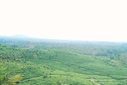 Hoax Tentang Orang Kalimantan