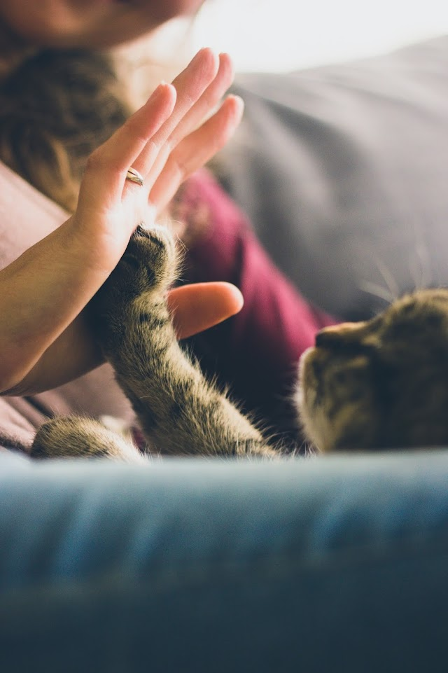 Supportive Advice on Caring for Senior Cats