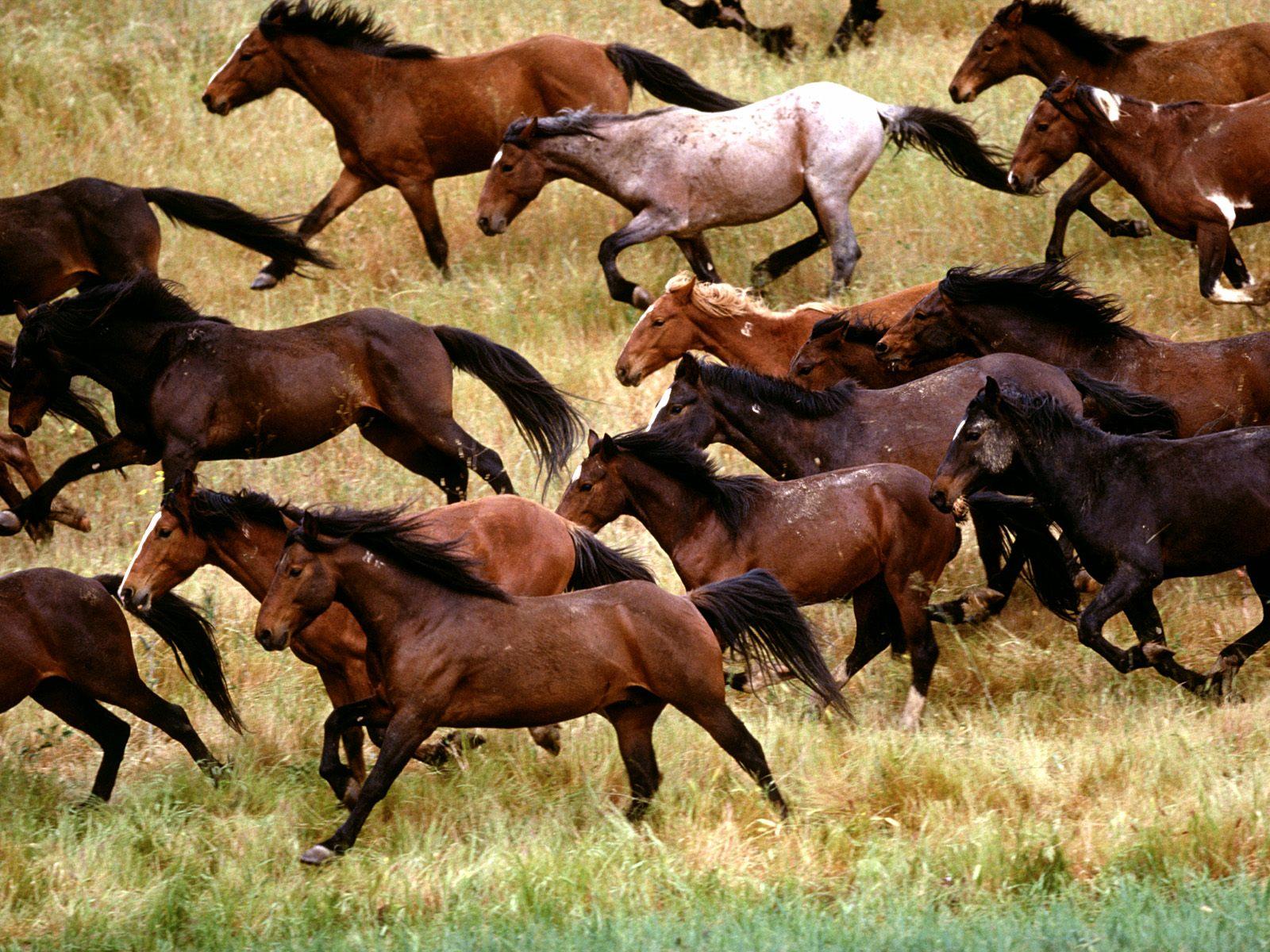 wild horses running wallpapers - photo #21