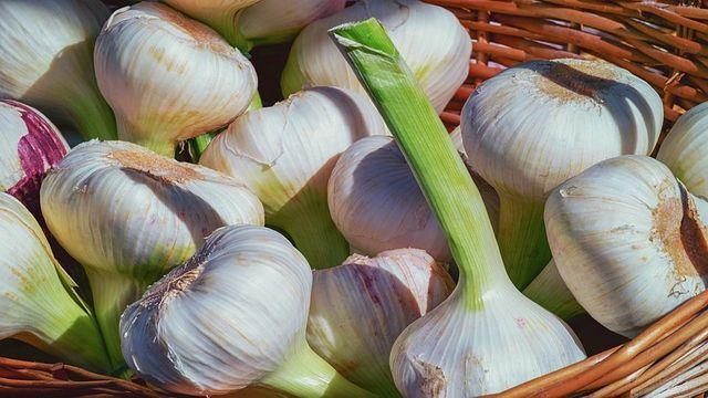 lahsun for weight loss garlic benefits in Hindi