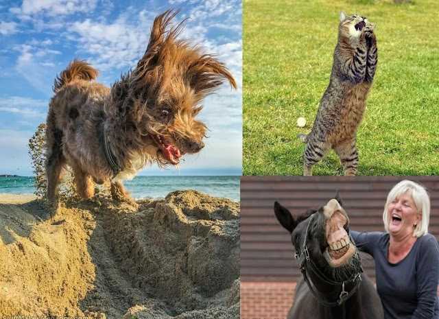 20 Funny Pet Pictures From Comedy Wildlife Photography Awards 2020