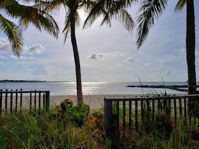 Sunrise through coconut trees on the beach