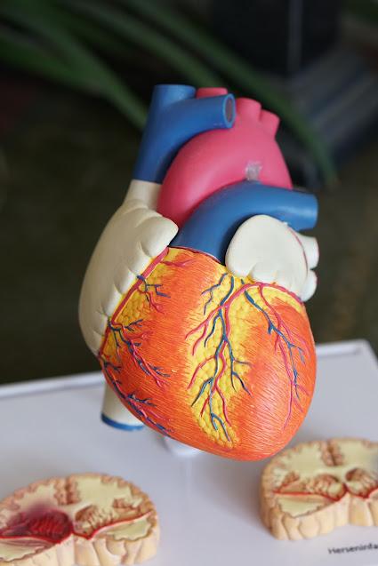 हृदय दर्द के १६ घरेलू इलाज