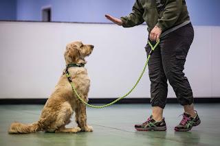Información importante sobre el entrenamiento para perros