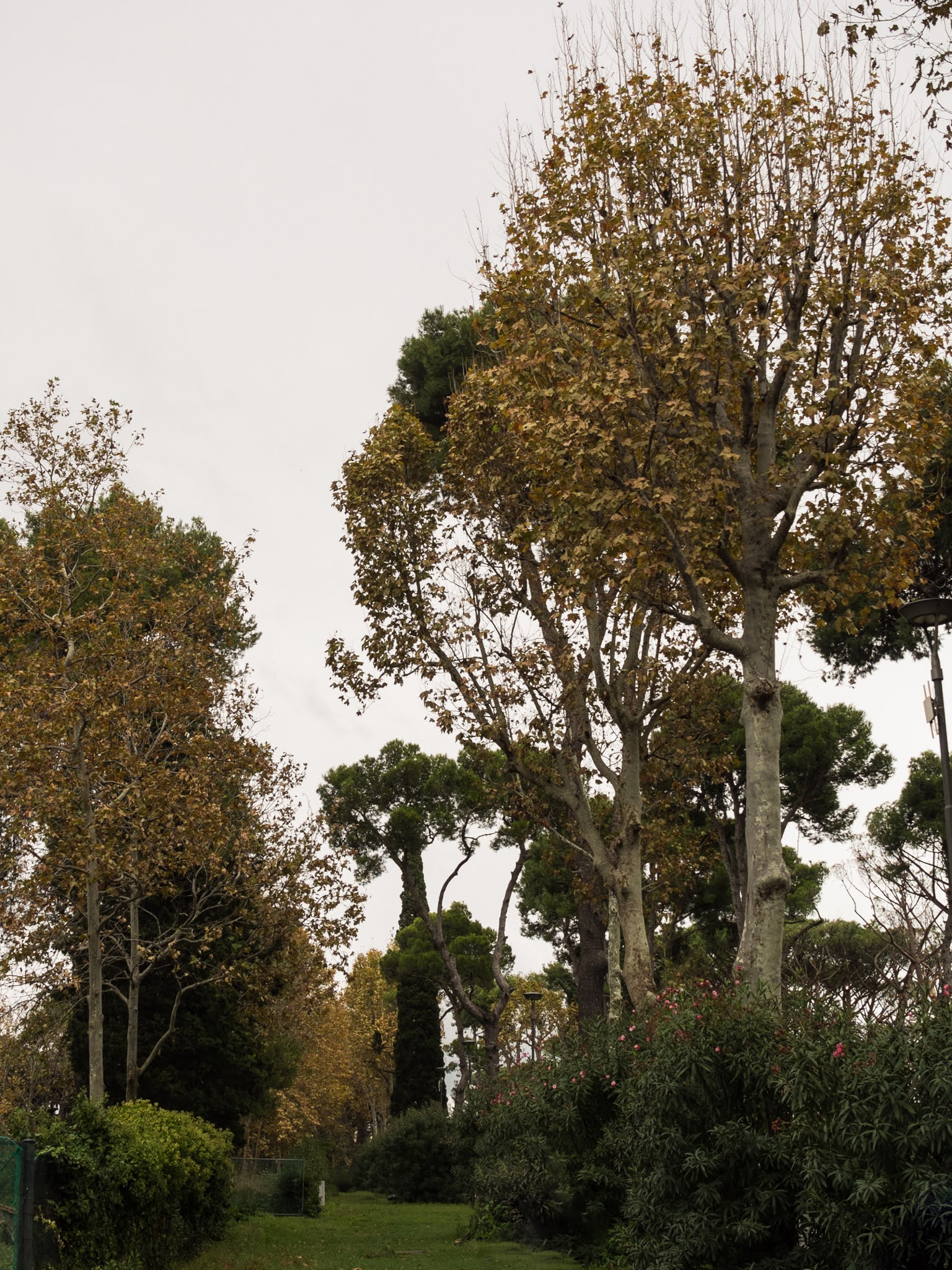 A mix of evergreens and autumnal maple trees in the Park of Pompeii.