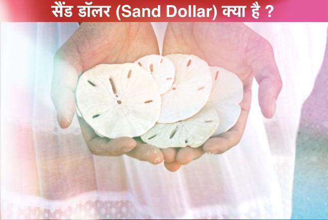 क्या आप रेत डॉलर के बारे में जानते हैं? What is Sand Dollar ? सैंड डॉलर क्या है?