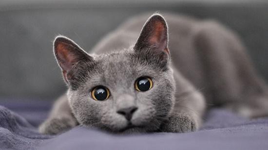 hal yang perlu dipertimbangkan sebelum membeli kucing