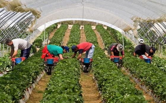 """صوت الشلف يحقق : """"شباب الشلف يصرفون النظر عن العمل بالفلاحة وآخرون يطالبون بالتأمين """""""