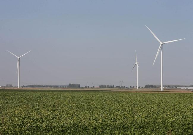 L'Etat a favorisé les éoliennes venues de Chine… au détriment de l'écologie