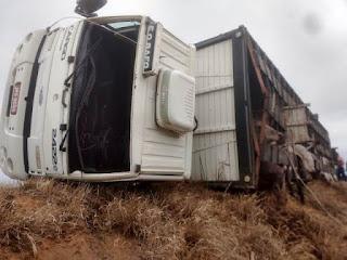 Caminhão carregado com Gado capota