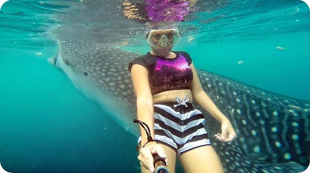 Marischka+Pruedence+Hiu+Paus+Whale+Shark+Gorontalo