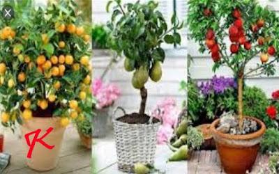 Tanaman herbal – Memanfaatkan pekarangan rumah | Bagian 3