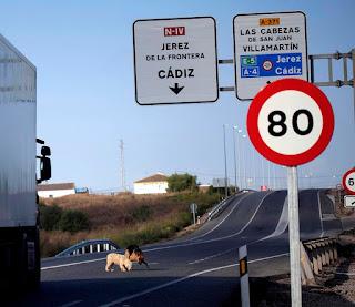 Mientras los trabajadores recogen la juncia dos perritos, atraidos por algo que hay en el asfalto, se meten en la carretera. La situación es angustiante porque los animales no comprenden el peligro de muerte que corren.