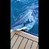 Tubarão 'surge do nada' e morde barco de mergulhador; vídeo