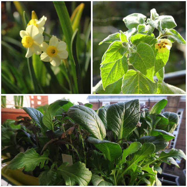 A collage of 3 pictures showing balcony plants in April.