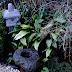 Project 01: Shoso's Home Garden