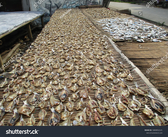 stock-photo-production-of-traditional-salted-fish-in-the-subang-regency-west-java-indonesia-1880892535