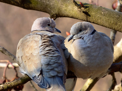 Twelve Days Of Christmas, Two Turtle Doves, Living From Glory To Glory Blog...