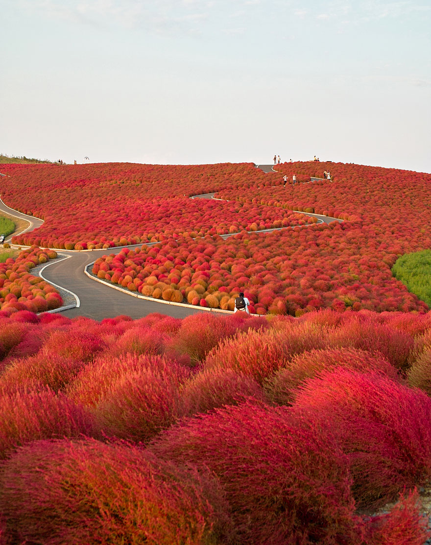 Japan, Hitachi Seaside Park