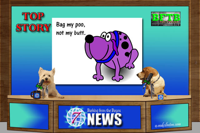 BFTB NETWoof News top story on a new dog poop invention