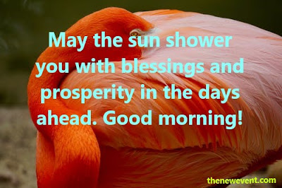 Best Good Morning Quotes Messages Images