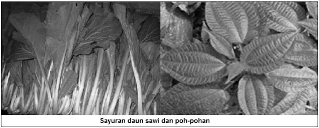 Sayuran daun (leaf vegetables) - Sayuran daun sawi dan pohpohan - Jenis Sayuran Berdasarkan Bagian Tanaman yang Dimakan