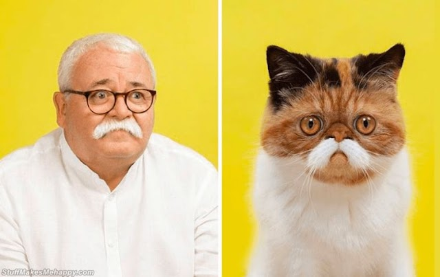 Photographer Gerrard Gethings Celebrates Lookalikes Between Cats And Humans