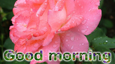 Good morning images with flowers HD free download