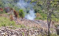 Aksi Pembabatan di Kawasan Tutupan Negara So Dana Kala, Kades O'o Prihatin