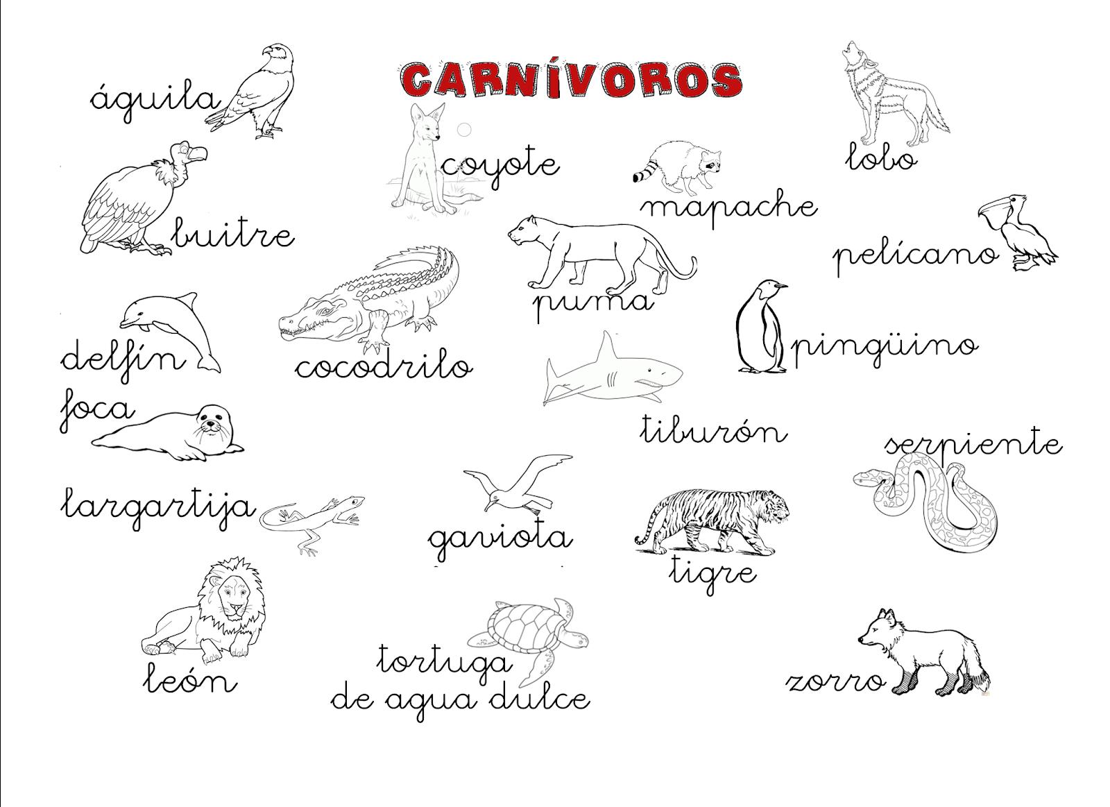 Que Puedo Hacer Hoy Animales Carnivoros Ejemplos