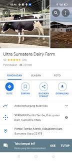 Perusahaan sapi perah terbesar di Indonesia