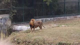 jubilee park zoo,jubilee park jamshedpur