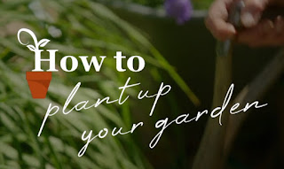 How to plant up your garden
