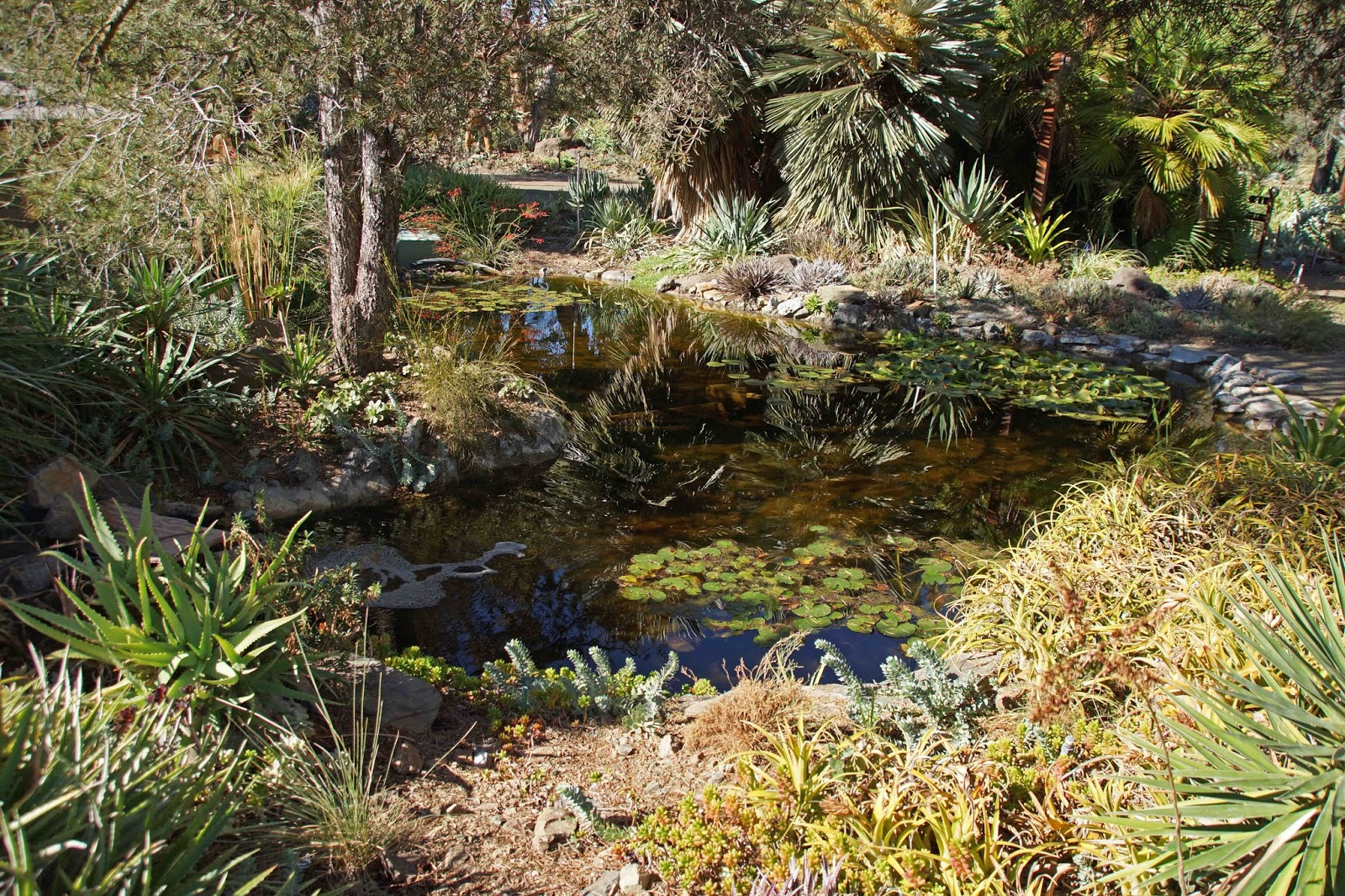 A Visit To Ruth Bancroft Garden