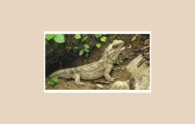 Reptil Sebagai Vertebrata