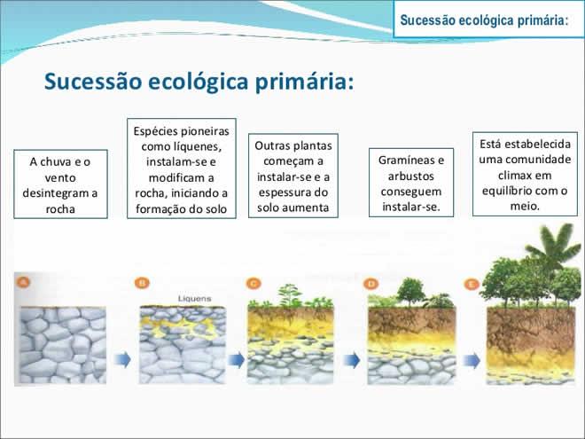 Sucessão Ecológica Primária e Secundária