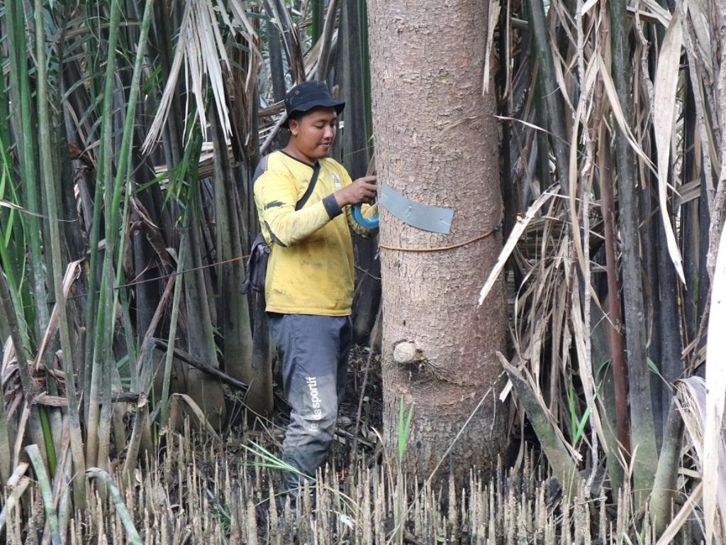 IKAMaT dan YKAN Lakukan Pemantauan Ekosistem Mangrove di SM Muara Angke